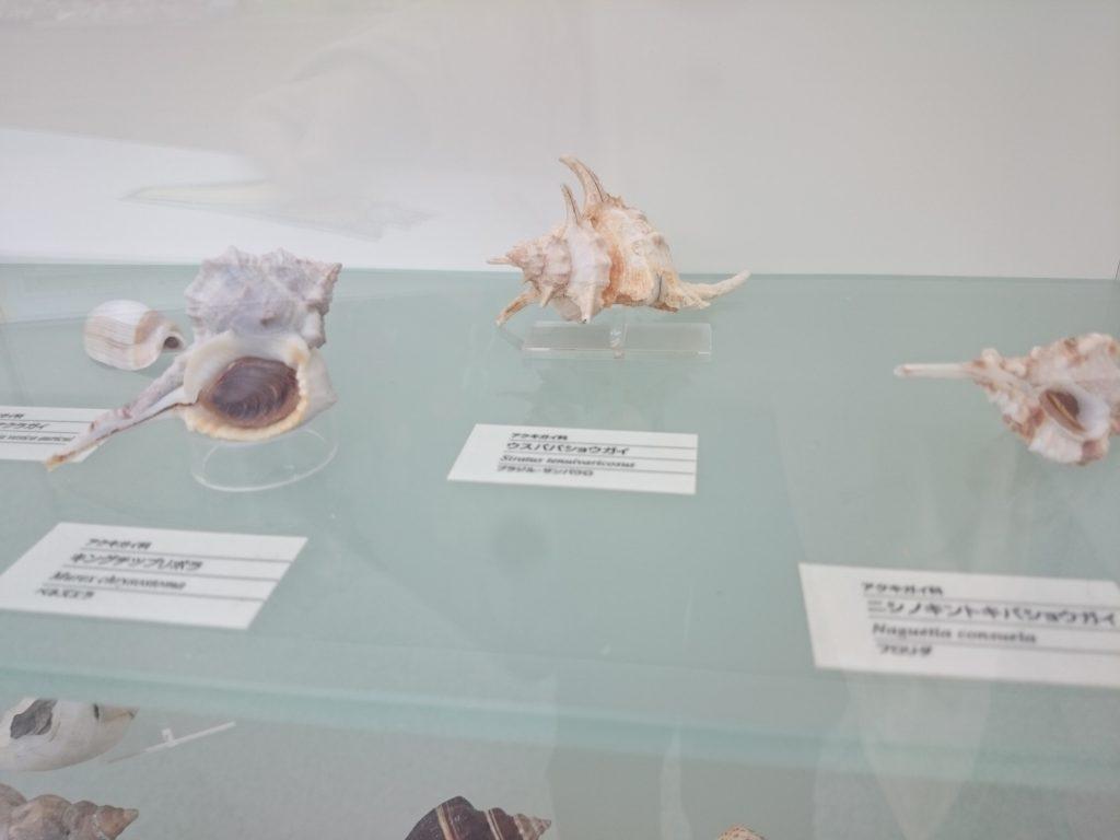 西宮市貝類館:さわれる、遊べる、ファミリーからデートまでおすすめ!