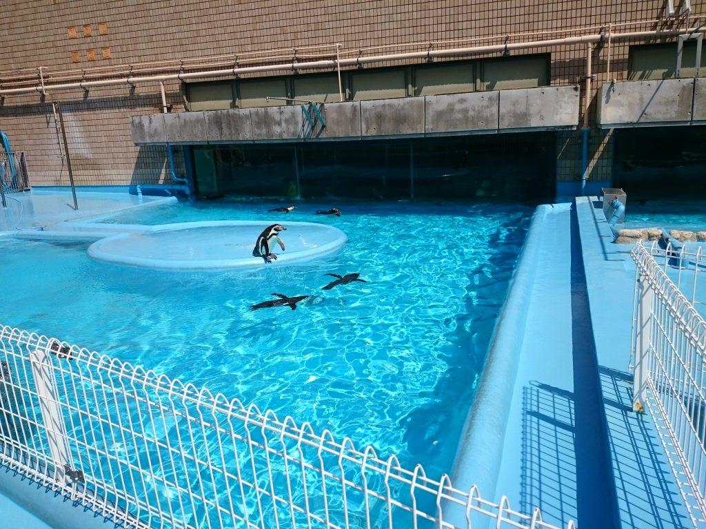 パンダに会える!王子動物園 ペンギン 神戸