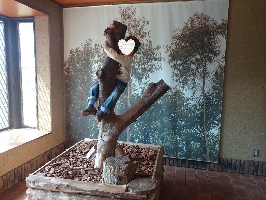 フォトスポット 面白 入場料600円でパンダに会える!!王子動物園