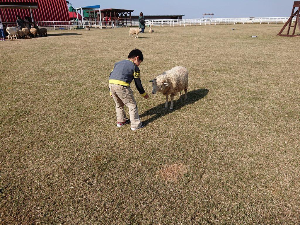 お勧め 子どもとお出かけ ワールド牧場 エサやり体験